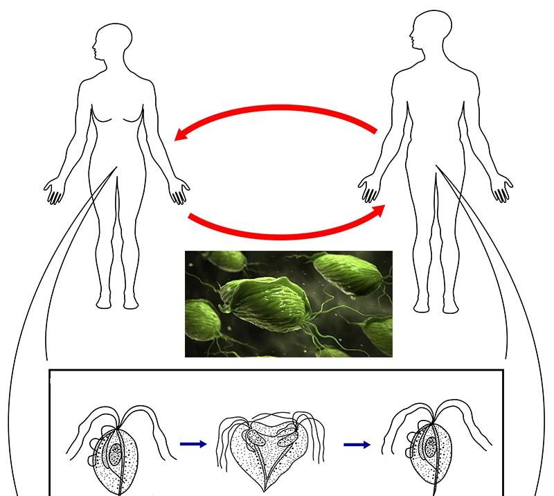 лечение простейших паразитов